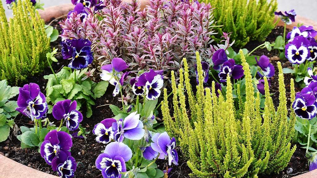 5 Eye Catching Plants