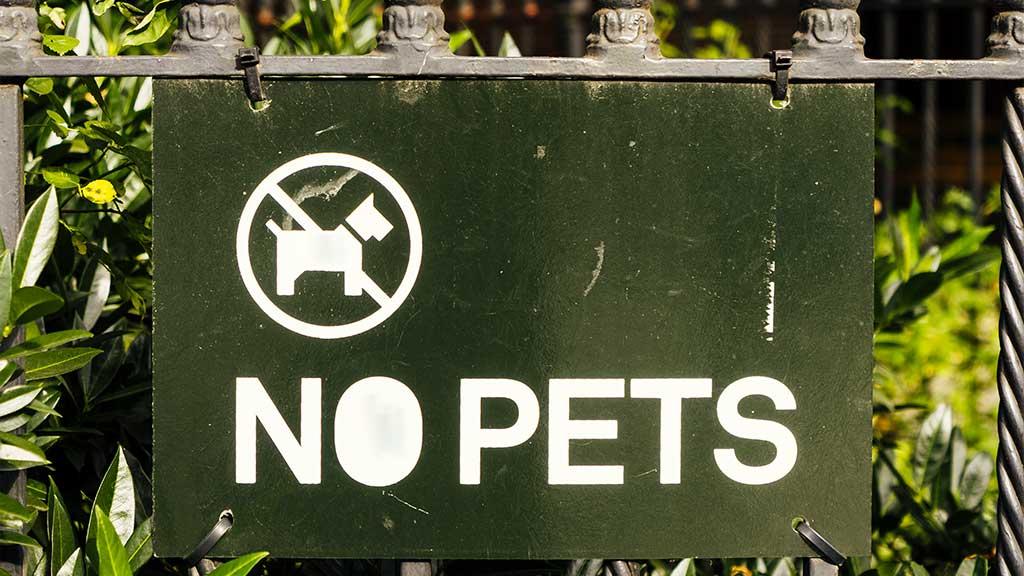 local pet laws