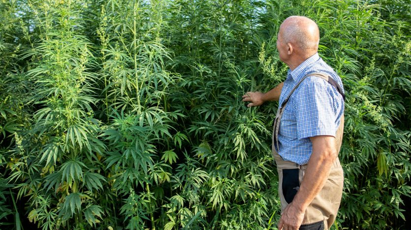 Is it Legal for Tenants to Grow Marijuana in Florida?