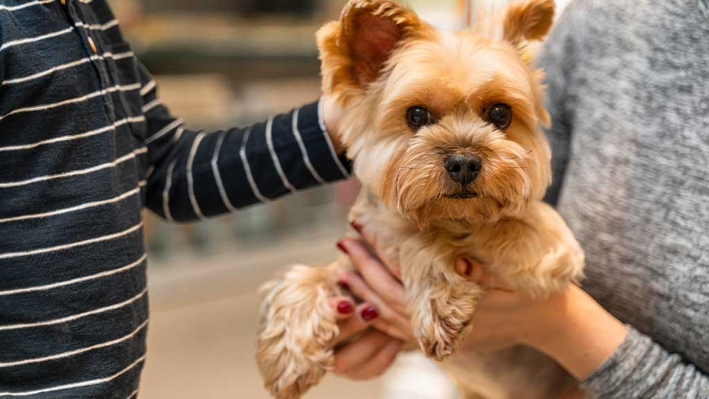 What Happens During a Pet Screening?