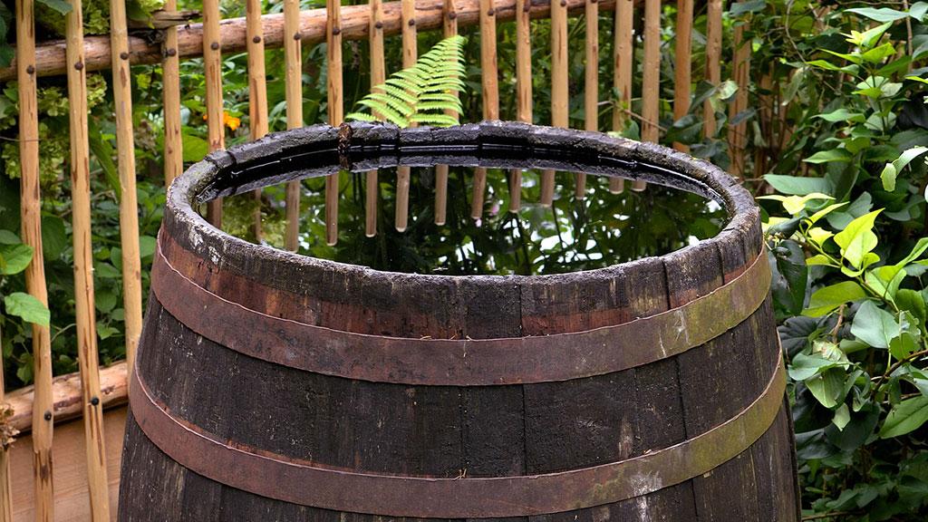 Collect Rainwater