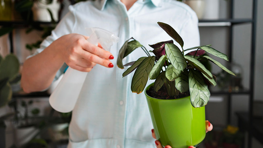Choose Plants That Require Little Water