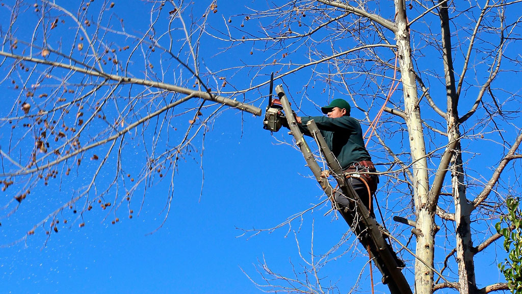 Are You Responsible for Pruning on Your Rental Property? A Landlord's Pruning Guide