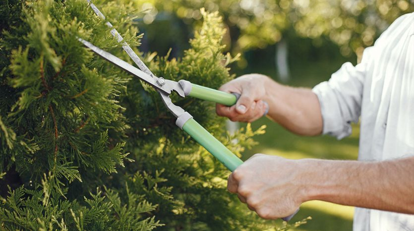 Tree Trimming at Your Rental Property: Is it Necessary?