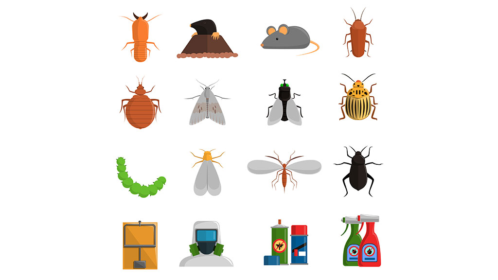 What are the common types of pests in rental properties?