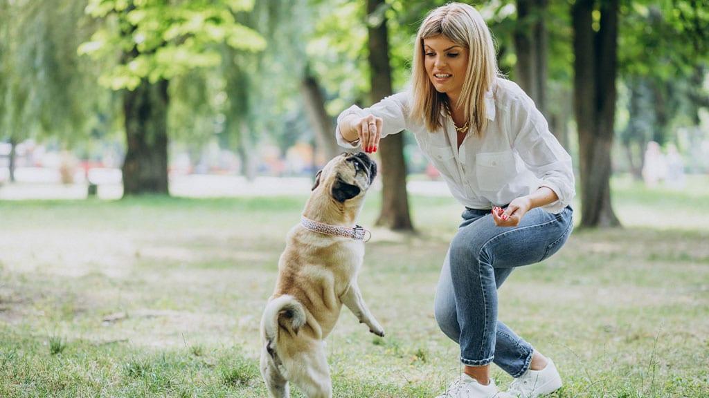 Conduct a pet screening