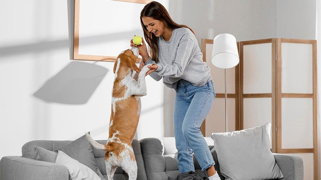 It makes the rental property pet-friendly
