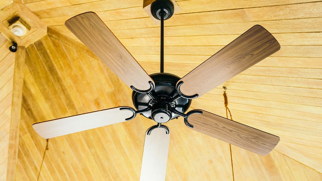 Dust and Reverse the Ceiling Fans