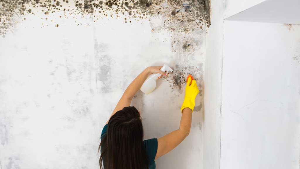How to Prevent Mold Growth in Your Rental Home